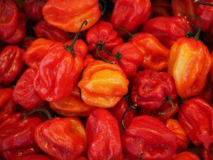 Odla chili – det är bra för dig